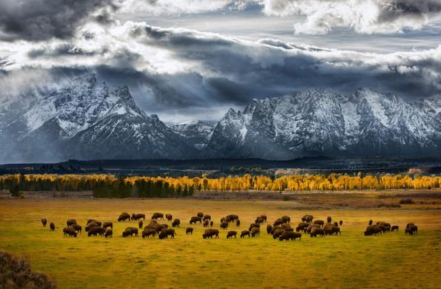 donde el búfalo anda © Glen Hush/National Geographic Photo Contest) .