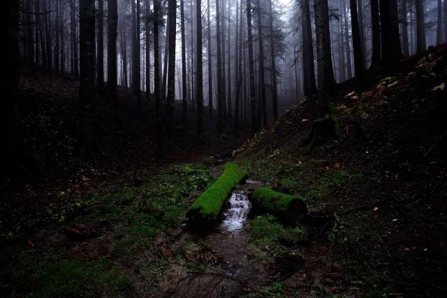 dentro de los matorrales © Stefano Spezi/National Geographic Photo Contest).